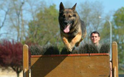 Image of dog jumping a wall