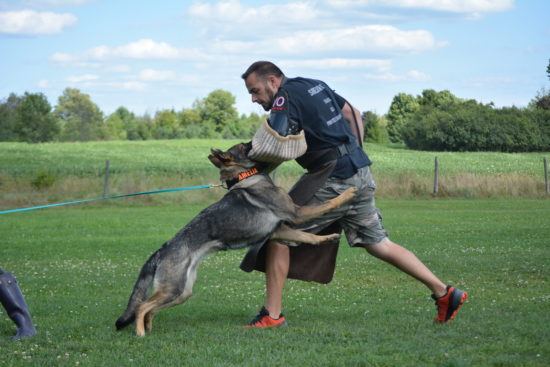 Trained Protection Dogs For Sale